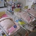 新生寶寶寶排排隊