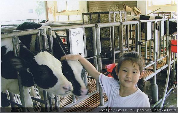 琪與牛.jpg