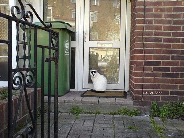 doorcat2.jpg