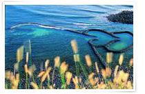 來源:交通部觀光局澎湖國家風景區管理處 七美雙心石滬