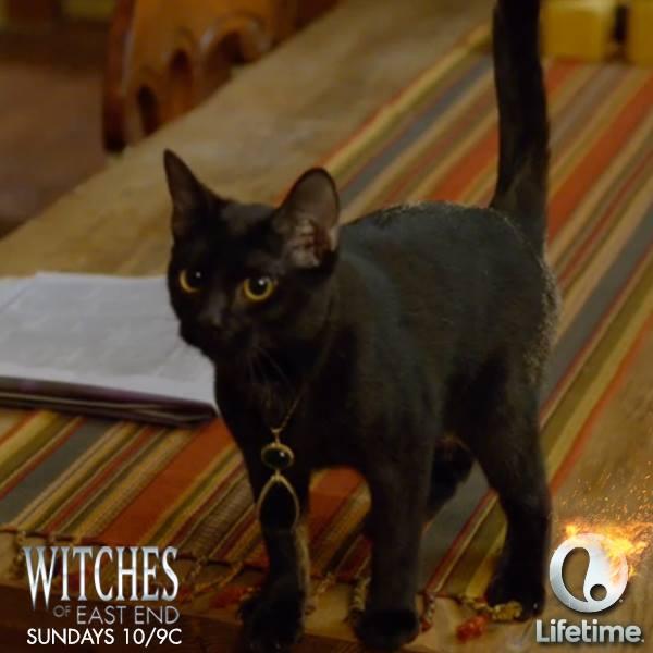 溫蒂幻化成貓