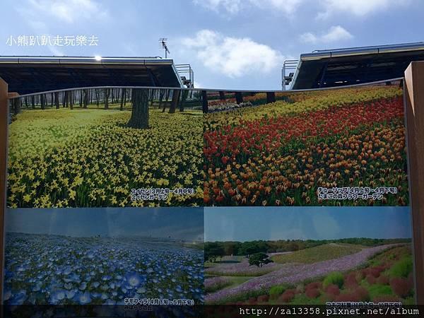 20160422茨城常陸海濱公園_5015.jpg