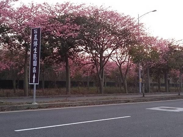 2014.12.07 虎尾高鐵 賞花 (4).jpg