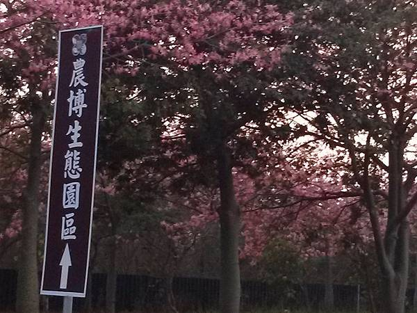 2014.12.07 虎尾高鐵 賞花 (9).jpg