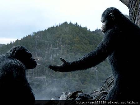 New-DawnofthePlanetoftheApes-photo10.jpg
