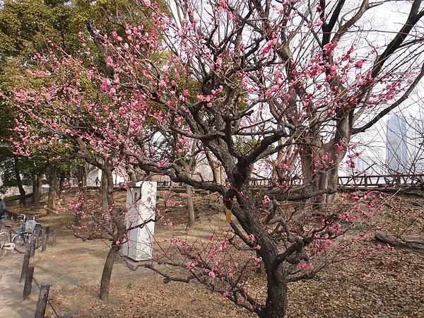 大阪城公園24.JPG