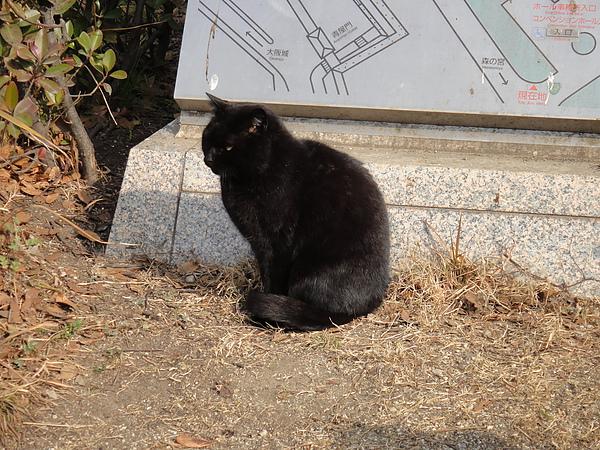 大阪城公園10.JPG