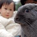 兔兔與小孩