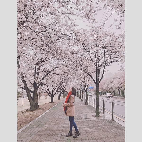 0405 雨裡遇桜1.JPG