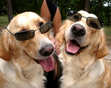 dogs_wearing_sunglasses.jpg