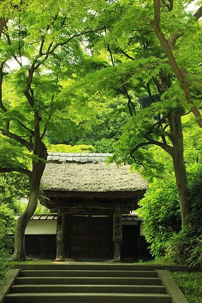 圓覺寺 (5)