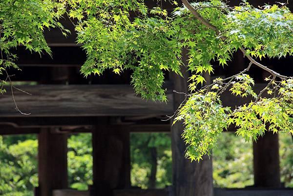 圓覺寺 (1)