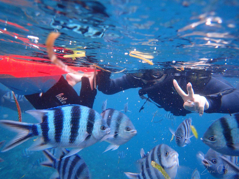 青洞浮潛 外面餵魚