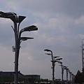 鳥巢35.JPG