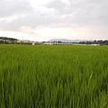 竹東軟橋0127.JPG