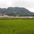 竹東軟橋0129.JPG
