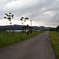 竹東軟橋0131.JPG