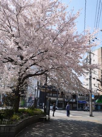 平野神社0102