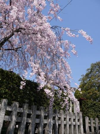 平野神社0103