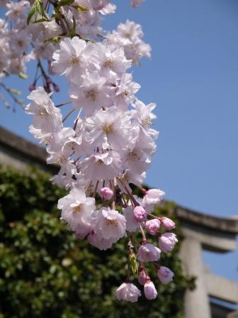 平野神社0105