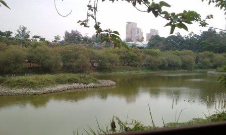鳥松濕地公園5.jpg