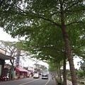 集集綠色走廊1.JPG