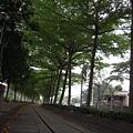 集集綠色走廊2.JPG