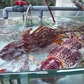 鯉魚門09.JPG