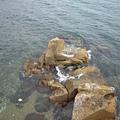 鯉魚門30.JPG