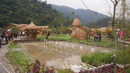 2011綠色博覽會38.JPG