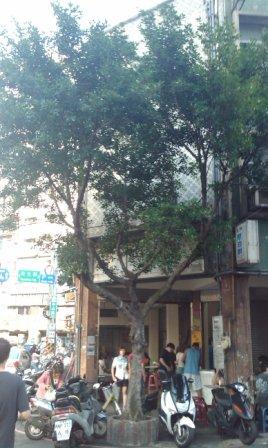 榕樹下02.jpg