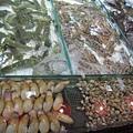 鯉魚門11.JPG