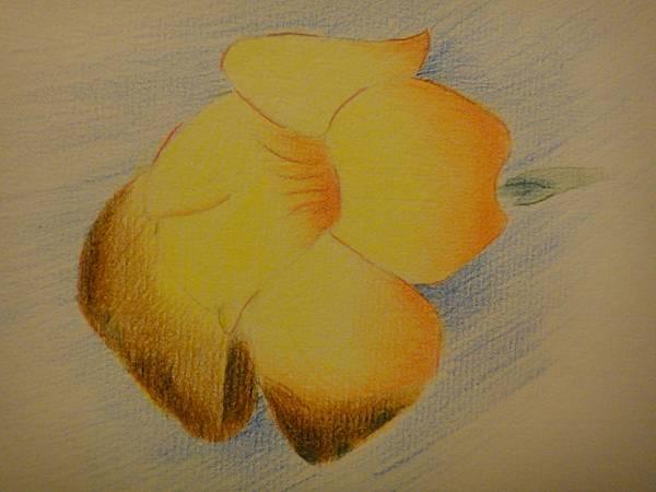 》學生色鉛花卉的光影練習(6)
