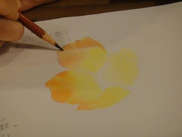 》學生色鉛花卉光影上色練習(5)