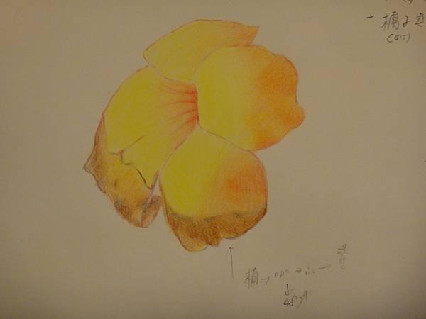 》學生色鉛花卉光影上色練習(成品)