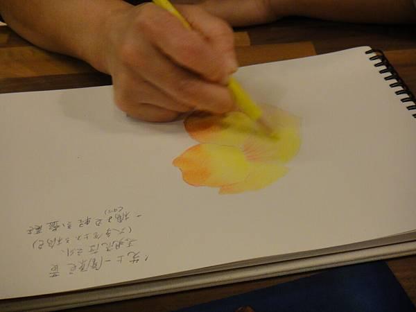 》學生色鉛花卉光影上色練習(8)