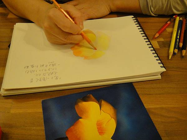 》學生色鉛花卉光影上色練習(6)