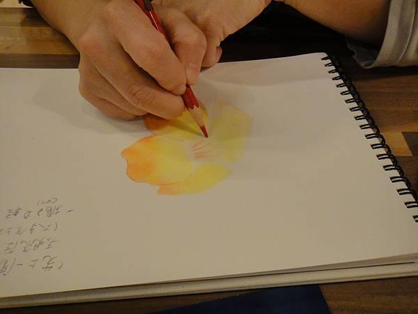 》學生色鉛花卉光影上色練習(7)