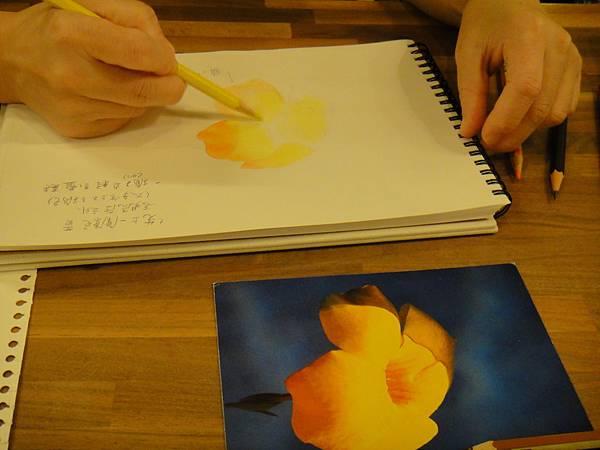 》學生色鉛花卉光影上色練習(4)