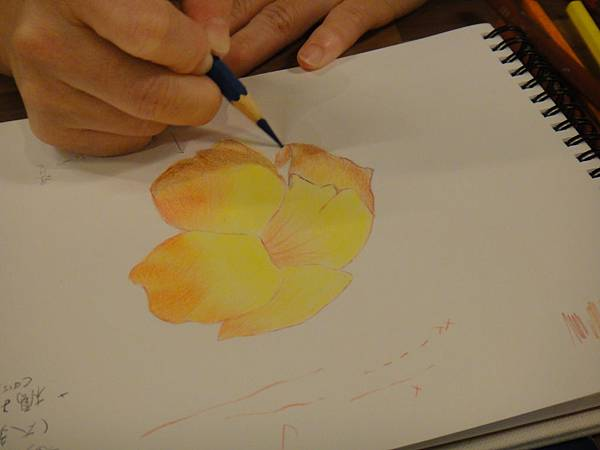 》學生色鉛花卉光影上色練習(9)