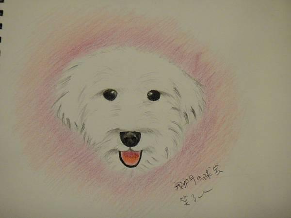》學生色鉛畫寵物_練習(成品)
