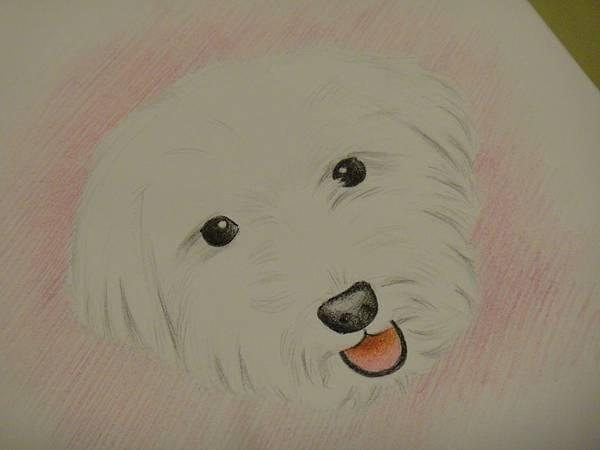 ※色鉛畫狗狗示範畫
