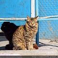 巴博爾薩爾沙灘的貓
