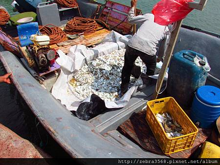 Hormuz Island - 漁獲