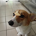 麻薯頂餅干.jpg