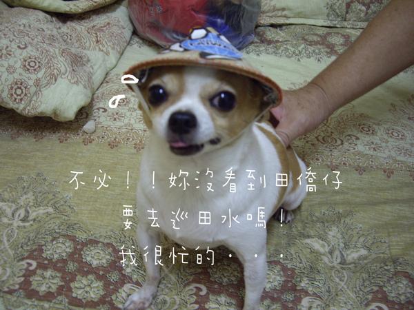 IMGP9369.jpg