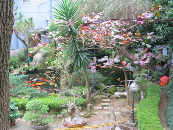 不錯的花園水池01