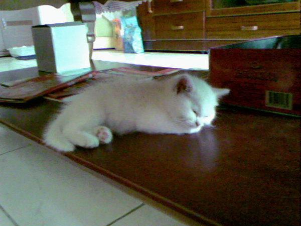 躲在桌子底下睡覺