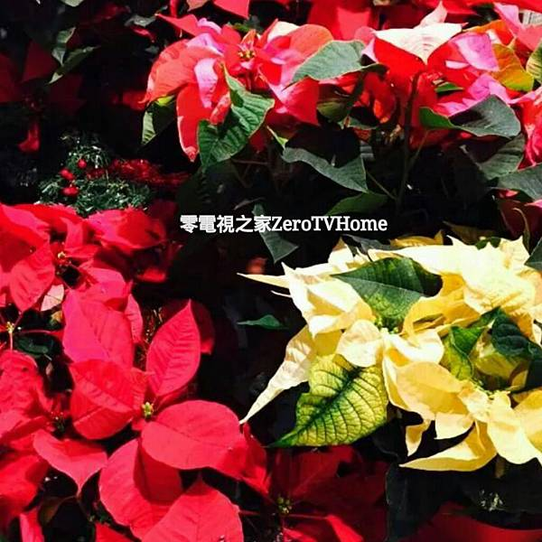 PhotoGrid_1418609704459