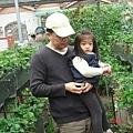 採草莓(2.7ys)